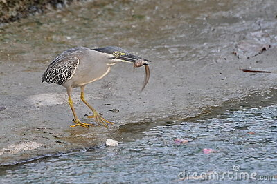 Bird catching its prey