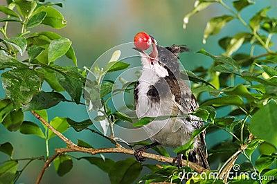 bird-cherry-14948898.jpg