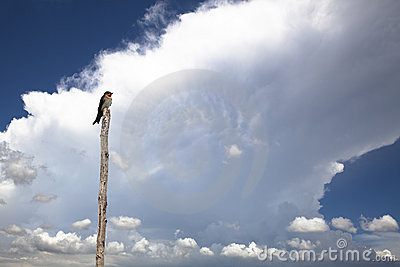 Bird with cloud