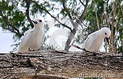 Bird couple. Sadness, offence.
