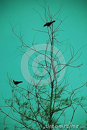 Bird Dating
