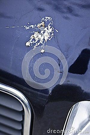 Bird droppings on car hood