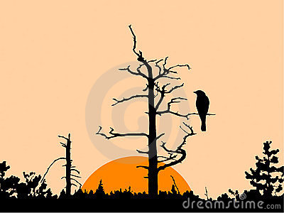 Bird on dry tree