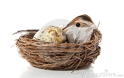 A bird with an egg