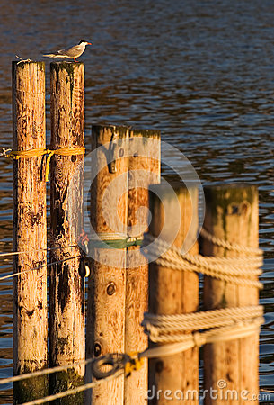 Free Bird Enjoying The Sun Stock Photos - 26195453