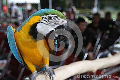 Bird exhibition Editorial Stock Photo
