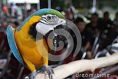 Bird exhibition Editorial Stock Photo