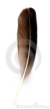 Bird feather isolated on vertical view