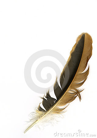Free Bird Feather Stock Photography - 3003732