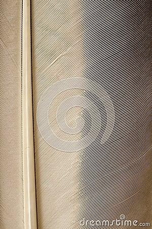 Bird feather background