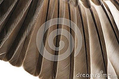 Bird Feathers Closeup