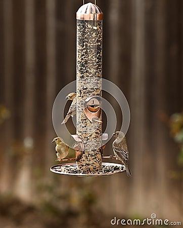 Free Bird Feeder Stock Photography - 13895422