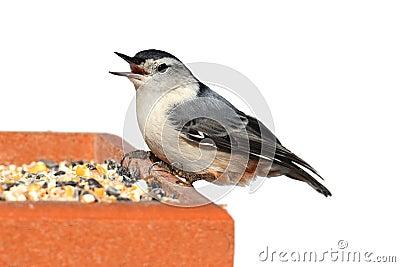 Bird On A Feeder on White