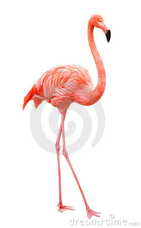 Free Bird Flamingo Stock Photos - 16231723