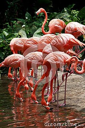 Free Bird Flamingo Royalty Free Stock Photography - 21805537