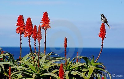 Bird, Flower & Ocean