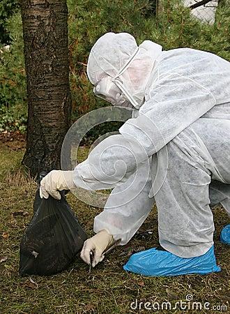 Free Bird Flu Danger 1 Royalty Free Stock Images - 1169909