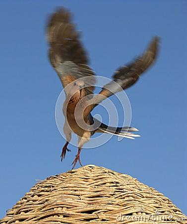 Free Bird Flying Stock Photo - 6409770