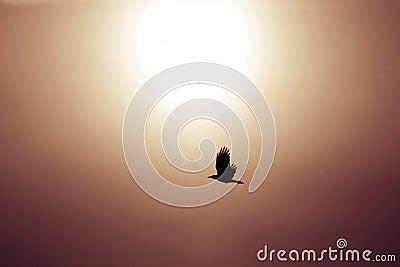 Bird flying in sun