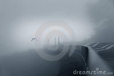 Bird in a fog