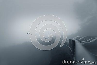Bird in a fog