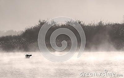 Bird on foggy lake