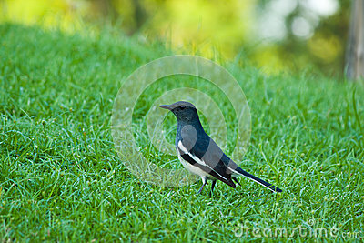 Bird glance at