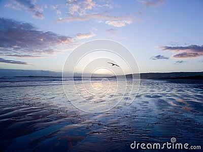 Bird Gliding over Sand