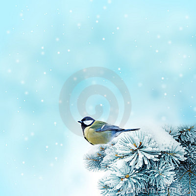 Free Bird (great Titmouse ) In Winter Time Royalty Free Stock Photos - 16589518