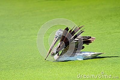 Bird with a Green Lake