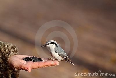 Bird on the hand