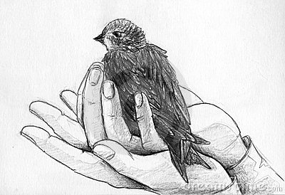 Bird in hands
