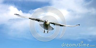 Bird from heaven into sky