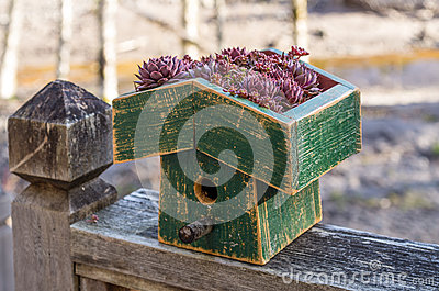 Bird house with a live green roof