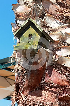 Bird House on the palm on blue