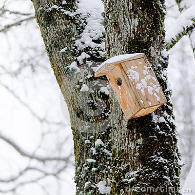 Bird house in the winter, hanging on the tree
