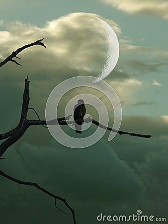 Free Bird In Tree Royalty Free Stock Photos - 11096168