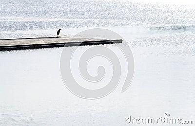 Bird on jetty