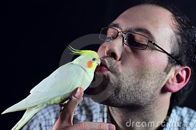 Bird kiss a man