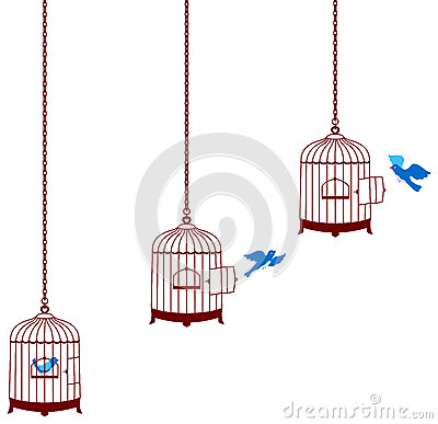 Bird leaving cage and return in the cage