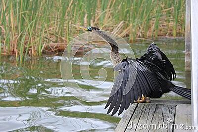 Bird-Life Lake
