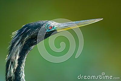 Bird with long beak or bill