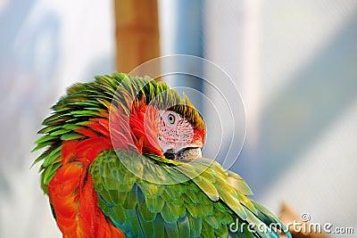 Bird, Macaw