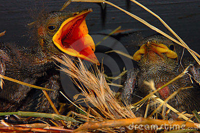 Bird with mouth open