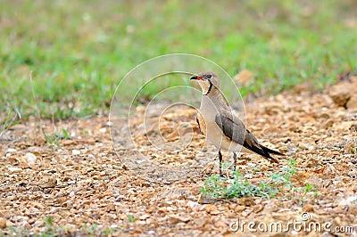 Bird on on nature