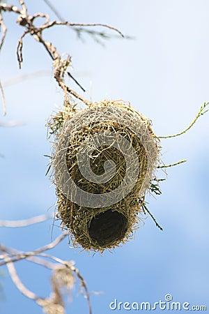 Free Bird Nest Stock Image - 12851831