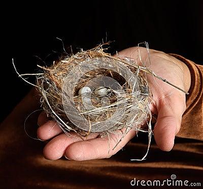 Bird Nest with Eggs in Hand