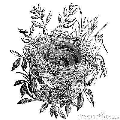 Free Bird Nest Vintage Illustration Royalty Free Stock Photo - 23033875