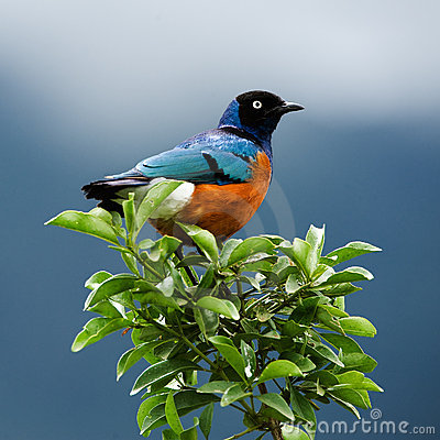 Free Bird On A Branch. Royalty Free Stock Photography - 15787127