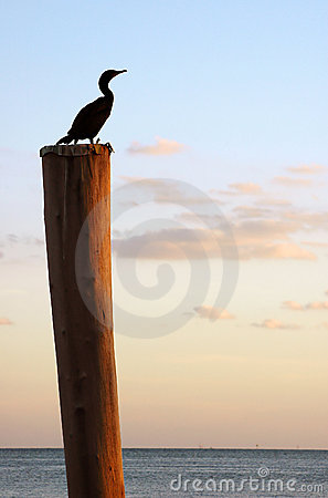Free Bird On Pole Stock Photography - 494982